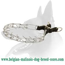 lifespan of belgian shepherd buy belgian malinois dog collar