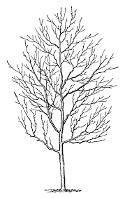 bare tree coloring page hard winter holidays of a free sheet