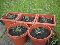 416 best diy gardening ideas images on pinterest growing
