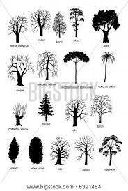 best 25 types of birch trees ideas on pinterest oak leaf