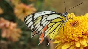 beautiful butterfly on flowers youtube