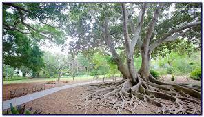 Botanical Gardens Sarasota Fl Selby Botanical Gardens Sarasota Fl Dunneiv Org