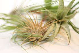 native plants in the tropical rainforest urban sprouts assorted small air plants