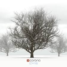 oak tree with snow by rnax 3docean