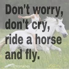 pferde spr che reiterhumor wir sind reiter instagram photos and