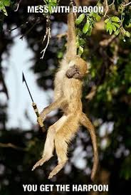 Baboon Meme - mess with the baboon you get the harpoon funny dank memes gag