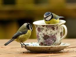 how to attract wild birds into your garden saga