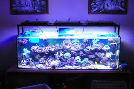 led lights for coral tanks 120w aquarium led lighting for fish coral tank in underwater lights