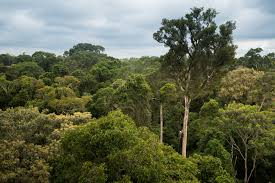 5 Dominant Plants In The Tropical Rainforest Can The Amazon Save The Planet Scientific American