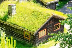 shed roof homes top 10 plants for a living roof inhabitat green design