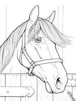 Coloriage Cheval sur Top Coloriages  Coloriages cheval