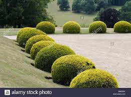 English Box Topiary - topiary stock photos u0026 topiary stock images alamy