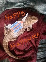 Bearded Dragon Halloween Costume Happy Halloween U2022 Bearded Dragon Org