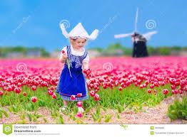 Tulip Field Dutch Tulip Field Holland Stock Photos Images U0026 Pictures