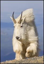 Utah wild animals images 85 best northern utah wildlife images wildlife jpg