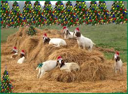 12 days of christmas country style rural ramblings