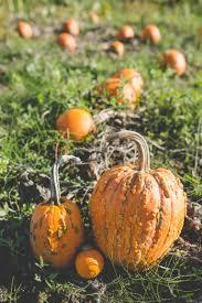 pumpkin patch maternity richmond pumpkin patch maternity vancouver lgbtq family