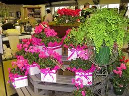 84 best garden centre display ideas images on pinterest florists