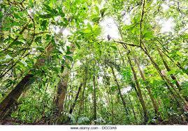 canopy amazon rainforest canopy amazon stock photos rainforest canopy amazon