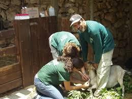 Tisch Family Zoological Gardens - tisch family zoological gardens in jerusalem the biblical zoo