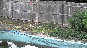 squirrel attacking ducks in my backyard lol youtube