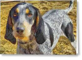 bluetick coonhound reviews bluetick coonhound painting by laurence canter