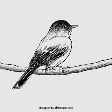 hand drawn bird vector premium download