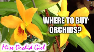 buy an orchid where to buy orchids tips on buying great orchids
