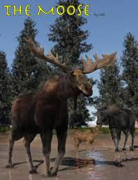 the moose 3d models and 3d software by daz 3d