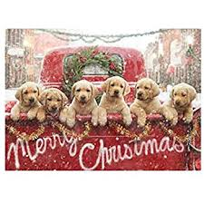dog christmas cards avanti christmas cards the 12 dogs of christmas 10