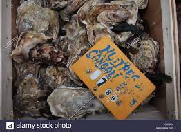 cuisiniste st malo oysters for sale st malo stock photo 38313938