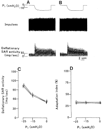excitatory mechanism of deflationary slowly adapting pulmonary