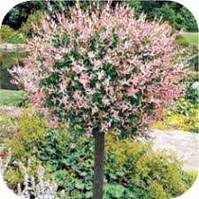 trees and photos of small trees for landscaping near house and