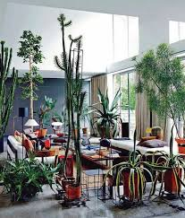 9 best home plants images on pinterest indoor house plants