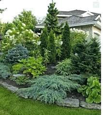 ornamental evergreen trees for landscaping garden landscape design