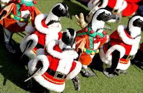 march of the christmas penguins slide 6 ny daily news