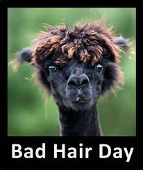 Bad Hair Day Meme - bad hair day cuteness overflow