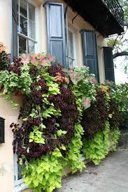 kletterpflanzen fã r balkon 12 best balkon images on balcony gardening and balconies