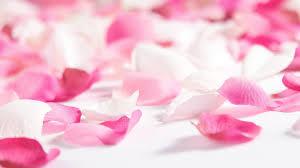 flowers u0026 rose petals wallpapers hd pictures u2013 one hd wallpaper