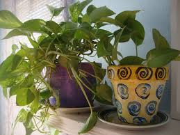 houseplants 10 houseplants that ease stress purify your home and are