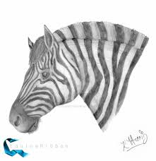 zebra sketch by equineribbon on deviantart
