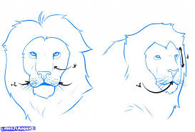 easy lion face sketch