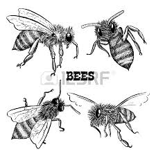 honey bees and honeycomb isolated vector illustration royalty free