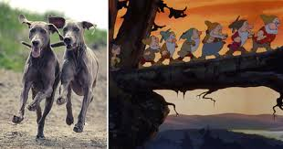 weimaraner vs afghan hound 8 dog breeds that perfectly represent disney characters dogtime