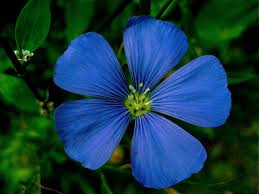 meaning of the color blue meaning of the color of flowers representative meaning of flowers