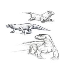 komodo dragon sketches by du57y on deviantart