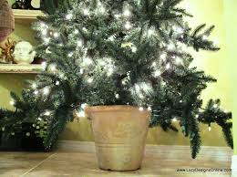 Potted Christmas Trees For Sale by Live Potted Christmas Trees For Sale Christmas Lights Decoration