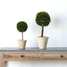 Best Plants For Desk by Office Design Office Desk Plants No Sunlight Office Plants That