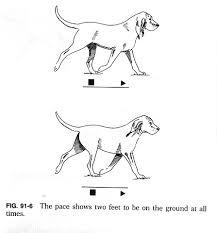 Dog Anatomy Front Leg 91f6 Jpg