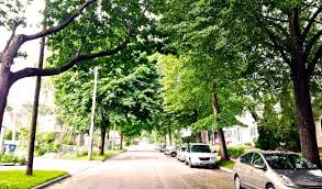 do logging companies buy yard trees timber works